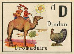 """D (Dindon et Dromadaire) __ """"Pour apprendre l'alphabet méthode nouvelle et amusante à colorier"""" illustré par Jean Guy"""