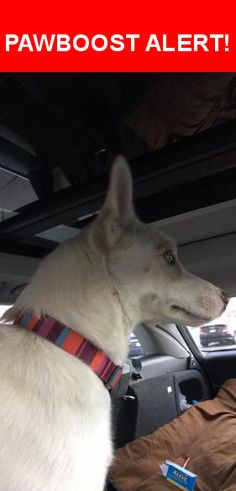 Is this your lost pet? Found in Colorado Springs, CO 80906. Please spread the word so we can find the owner!  Cute medium sized female. Colorful collar, really mellow.   Nearest Address: Near E Cheyenne Mountain Blvd & Breckenridge Dr E