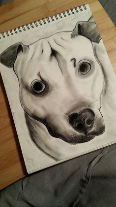 Pitbull charcoal and pencil drawing. Feb. 2017