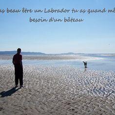 Labrador et bateau Labrador, Beach, Water, Outdoor, Animals, Photography, Gripe Water, Outdoors, Animales