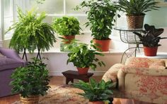 Back in the NASA reported some research it did on the value of indoor plants in cleaning up air quality. Over the years, researchers looked at more than 30 different plants to find the ones that are best at cleaning indoor air. Leafy Plants, Garden Plants, Indoor Plants, Hanging Plants, Potted Plants, Room Decor For Teen Girls, Room With Plants, Deco Design, Home And Deco