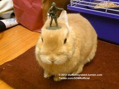 Soldier, Stuff on My Rabbit http://sulia.com/my_thoughts/43668cd4-8804-4b6a-944d-ff1bac7765ac/?pinner=undefined