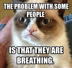 Grumpy Cat, Humor, funny!