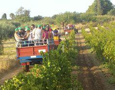 All team on trucks! #vendemmiasulmare #settesoli #vendemmia2013 #menfishire #sicily