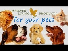 Aloe Vera Based Products for Animals by Forever Living Products http://perfectbody.flp.com