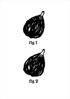 witty figs.