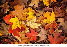 Background of colorful autumn leaves on forest floor by Elena Elisseeva, via Shutterstock