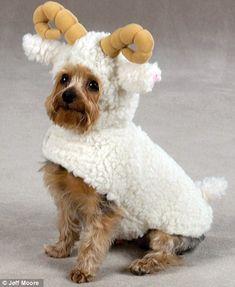 """¿A que se refieren cuando me dicen """"estás como una cabra? :)"""