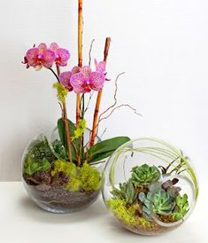 Explore these stunning and beautiful Phalaenopsis orchid arrangements. Find a wide range of exciting orchid arrangement ideas that includes potting your orchids in antiques, birdcages and much more! Orchid Terrarium, Orchid Planters, Orchids Garden, Garden Terrarium, Succulent Terrarium, Terrarium Centerpiece, Succulent Containers, Fall Planters, Container Flowers