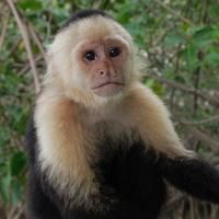 Manuel Antonio Costa Rica Things to Do - Tours and Activities in Manuel Antonio