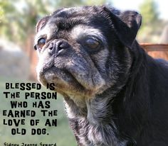 """""""Blessed is the person who has earned the love of an old dog."""""""