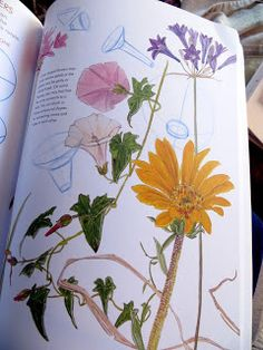 Artists' Journal Workshop: John Muir Laws' Laws Guide to Nature Drawing and Journaling Cartoon Drawings Of People, Drawing Cartoon Characters, Love Drawings, Disney Drawings, Easy Drawings, Basic Drawing, Beautiful Bugs, Nature Drawing, John Muir