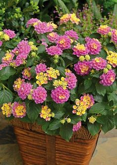 Heat-resistant flowers - Lantana,  Verbena. All plants need water to survive. However, like plants that require more water, there are plants that grow in lack of water. They are the best drought tolerant plants and can live without water for a long time.