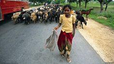 121013095648_india_girl_shepherd.jpg (976×549)