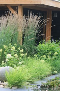 hydrangea garden care I love ornamental grasses! Garden Cottage, Garden Beds, Prairie Garden, Garden Sofa, Garden Seating, Back Gardens, Outdoor Gardens, Different Shades Of Green, Green Shades