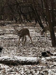 Big Whitetail Bucks, White Tail, Deer Hunting, Big Game, State Parks, Grid, Moose Art, Wildlife, Bucket