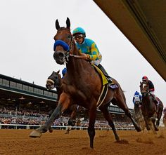 Congratulations, American Pharoah, you're also America's hero.   2015 Breeders' Cup | Slideshow | BloodHorse.com