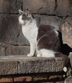 Street Cats Of Barcelona - The Happy Cat Site