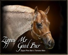 Zippos Mr Good Bar, an NSBA Leading Sire and an AQHA Leading Sire, Sire of World Champions and Congress Champions