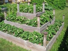 plants for a raised bed Strawberry Beds, Strawberry Planters, Strawberry Garden, Strawberry Patch, Edible Garden, Garden Beds, Vegetable Garden, Garden Animals, Fence Landscaping