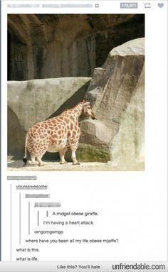 Midget obese giraffe @Valerie Avlo koopman
