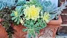 A Window Box of Succulents