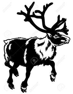 caribou reindeer,rangifer tarandus,animal of arctic,black white illustration Stock Vector