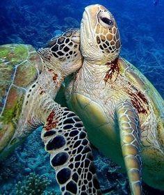 Tortugas submarinas