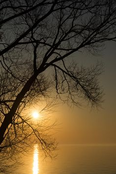 ✯ The Rising Sun And The Tree