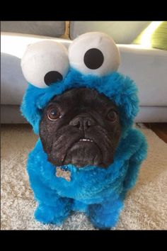 NOW CAN YOU GIVE ME COOKIES?? Me Cookie Monster me eat cookies