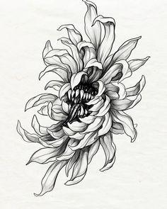 Tattoo Drawings, I Tattoo, Chrysanthemum Tattoo, Blackwork, Tatting, Sketches, Dark, Illustration, Ideas