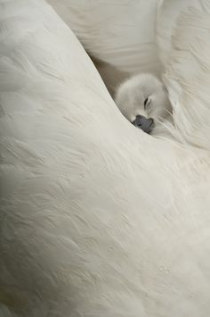 safe and warm.  There is hardly anything more beautiful than this picture closeup!!!
