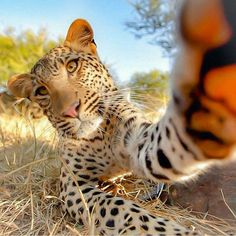 """""""But first, let me take a selfie! Photography by Jean Joaquim Crassous"""""""