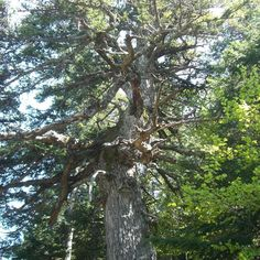 Une de ces arbres qui donne l'impression d'être si petite... Une photo qui date d'il y a quelques mois comme les feuilles le prouvent ;) #naturephotography #nature #landscape #campagne #foret #paysage #automne2017 #tree #trees #arbre #arbres #lorraine #france