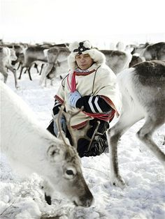 The reindeer whisperers… life of the Sami tribe and their reindeers - Telegraph.co.uk