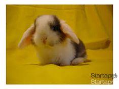nyúl - Google-keresés Rabbit, Google, Animals, Bunny, Rabbits, Animales, Animaux, Bunnies, Animal