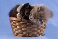Cute Kittens Hugging Snuggling Cats in a Basket by justamoment, $22.00