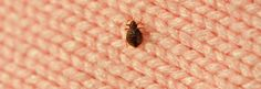How to check for bed bugs in a hotel - via Consumer Reports
