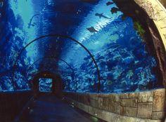 The Shark Reef Aquarium at Mandalay Bay hotel houses over 2,000 fish and animals