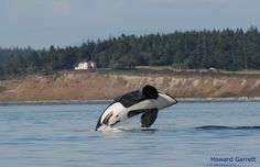 Orca/grey whale watching -- most friendly from shore, maybe rent vacation place on the beach along migration route
