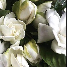 """Be like the flower, turn your face to the sun"". - Khalil Gibran #summersolstice #letthegamesbegin #californiacoast #gardeniarevolution #summertime #celebratelove #farmtovase #californiastyle #gardenias #whiteflowers #joy"