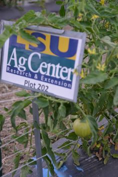 For more information on the LSU AgCenter Urban Garden located at the New Orleans Ernest N. Morial Convention Center visit www.f2t-int.com, and join us at the Farm to Table International Symposium, 8/2-4/2014!