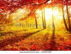 Znalezione obrazy dla zapytania autumn fall