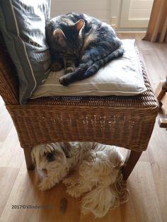 Wij passen helaas niet meer samen op één stoel, dus dan doen we het maar zo...
