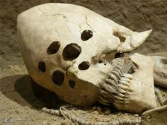 Five of the strangest skulls ever found - fascinating