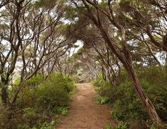 Where will this path lead? On the Cape Brett Track #NewZealand - @theglobalcouple on Instagram
