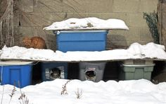 How to Care for Outdoor Cats in Winter : The Humane Society of the United States – dog kennel indoor Feral Cat Shelter, Feral Cat House, Feral Cats, Shelter Dogs, Cat Shelters, Outdoor Shelters, Dry Cat Food, Outdoor Cats, Pets