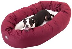 Bagel Dog Bed By Majestic cat Products *** Want to know more, visit the site now : Cat Beds and Furniture