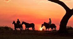 Access areas that vehicles can't reach on a horse safari. Cowboy Horse, Horse Riding, Africa Travel, Cowboys, South Africa, Safari, Photo Galleries, To Go, Wildlife