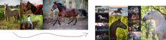 2012 - 2015: Eine lange Reise. Wie ich in nur 3 Jahren zu den Top 10 Pferdefotografen weltweit wurde und dabei mich selbst fand!